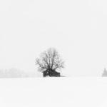 Winterstorm VI (BW)
