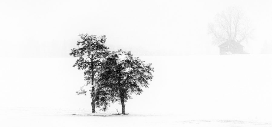 Winterstorm (BW)