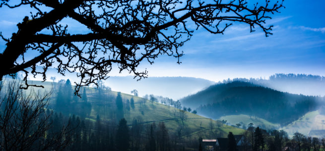 Black Forest Morning Mist