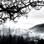 Black Forest Morning Mist (BW)