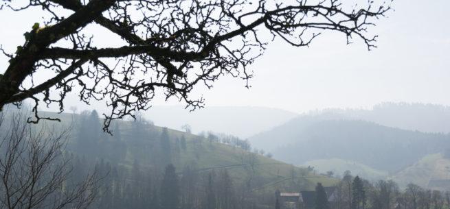Black Forest Morning Mist (original)