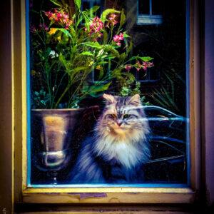 Window-Cat